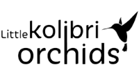 kolibri-jerb